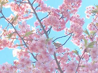 春 - No.367512