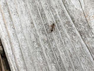 木製ベンチの写真・画像素材[725361]