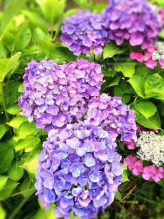 花の写真・画像素材[297626]
