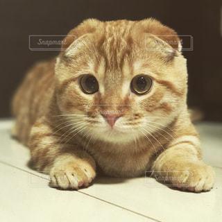 猫の写真・画像素材[335770]