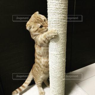 猫の写真・画像素材[335771]