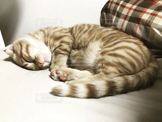 猫 - No.335775