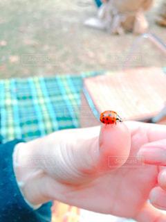 てんとう虫の写真・画像素材[1093615]