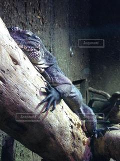 野生動物の写真・画像素材[299258]