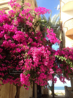 花の写真・画像素材[463689]