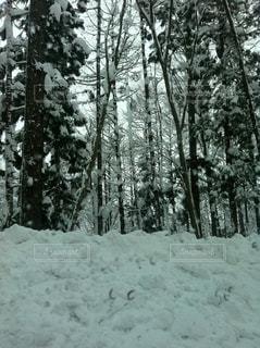 冬の写真・画像素材[298119]