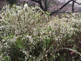 花の写真・画像素材[421168]