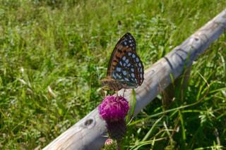 ピンクの花は草の中に立っています。の写真・画像素材[805263]
