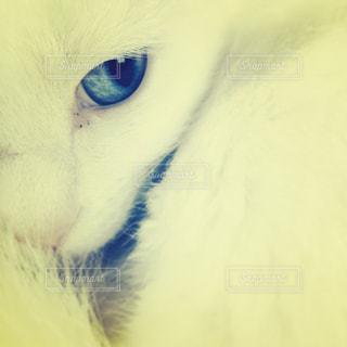 猫 - No.299477