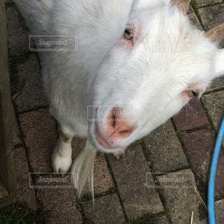 動物の写真・画像素材[299626]