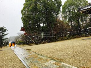 雪の写真・画像素材[298614]