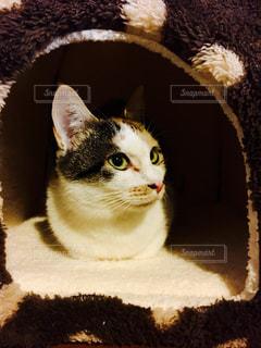 猫 - No.298623