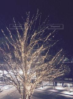 雪の中での花火の写真・画像素材[985810]