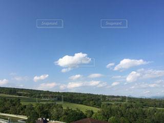 背景の木と大規模なグリーン フィールドの写真・画像素材[985814]