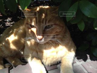 日陰に座っている猫の写真・画像素材[987106]