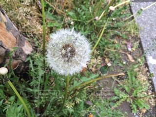 近くの植物のアップの写真・画像素材[990493]