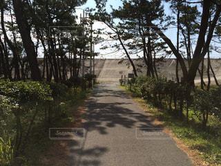 道の端に木のパスの写真・画像素材[990496]