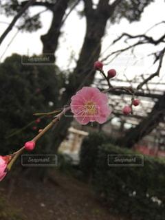 春の写真・画像素材[384609]