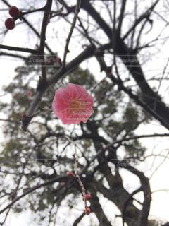 春の写真・画像素材[384610]