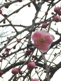 春の写真・画像素材[384611]
