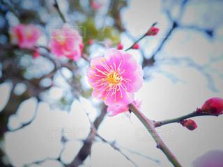 花 - No.444504