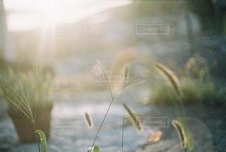 自然 - No.8935