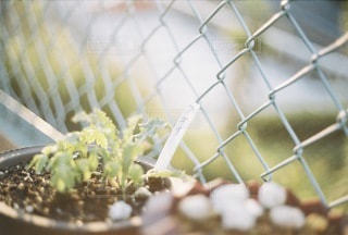 植物 - No.8934