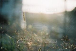 自然 - No.8933
