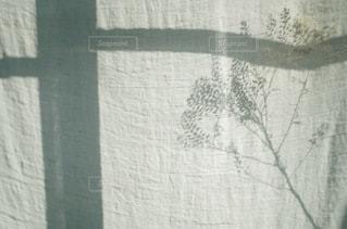 植物 - No.8904