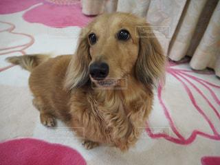 犬 - No.308706