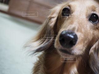 犬 - No.308707