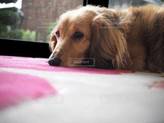 犬 - No.308708