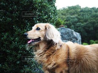 犬の写真・画像素材[308709]