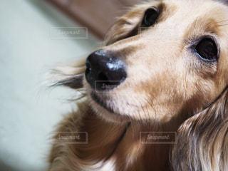 犬 - No.308710