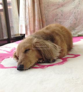 犬の写真・画像素材[312628]