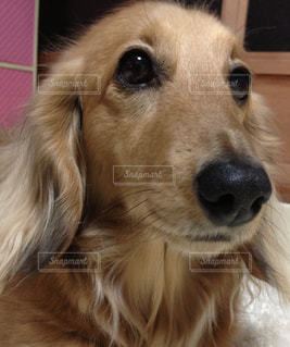 犬の写真・画像素材[312629]