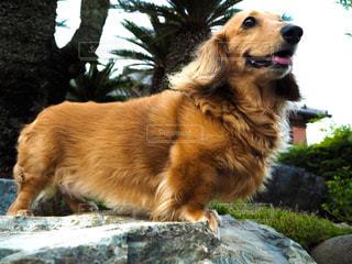 犬 - No.312631