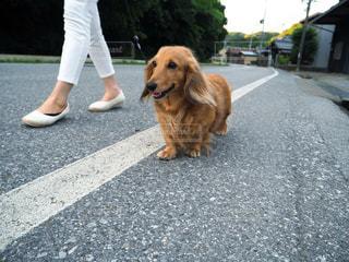 犬 - No.312632