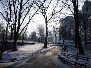 冬の写真・画像素材[307514]