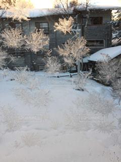 雪の写真・画像素材[314401]