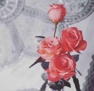 ピンクの写真・画像素材[301970]