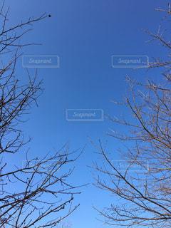 青空の写真・画像素材[310285]