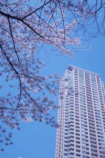 春の写真・画像素材[417946]