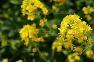 春の写真・画像素材[421352]