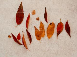 秋の訪れを採集の写真・画像素材[849599]