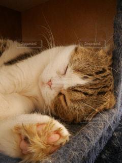 猫の写真・画像素材[299452]