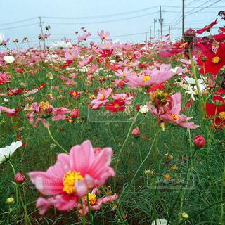花畑 - No.299504