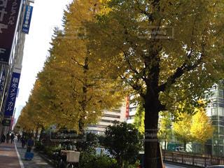 風景 - No.299672