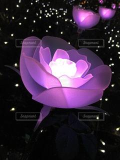 花の写真・画像素材[299695]