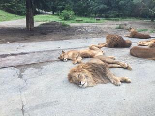 動物園の写真・画像素材[299704]